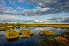 Maastik / Landscape