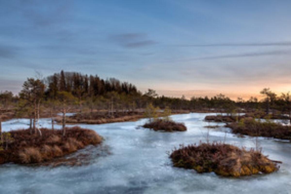 Sunset at the frozen bog