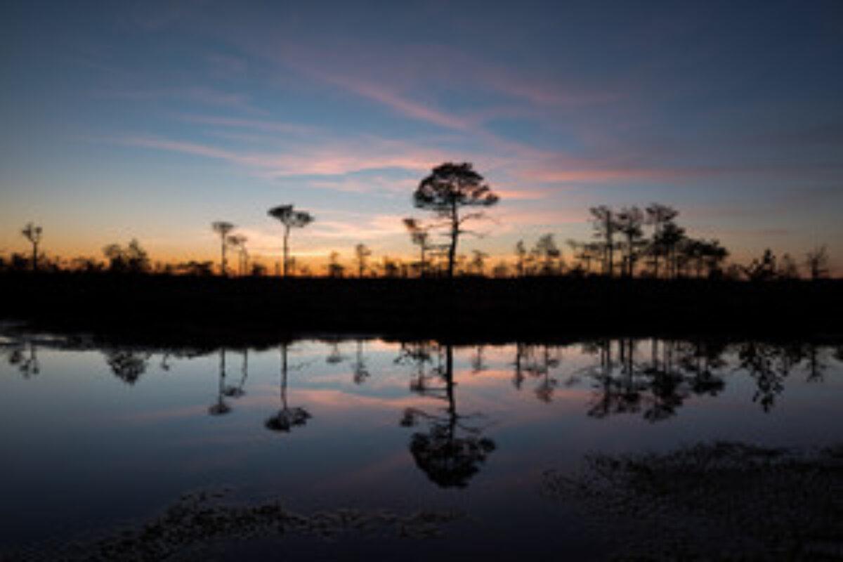 Bog pond reflection
