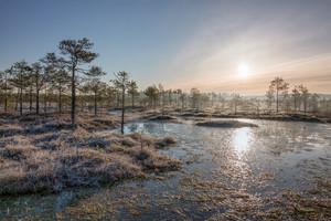 Sunrise in frosty bog