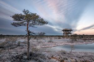 Bog tower