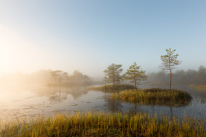 Misty sunrise in the bog