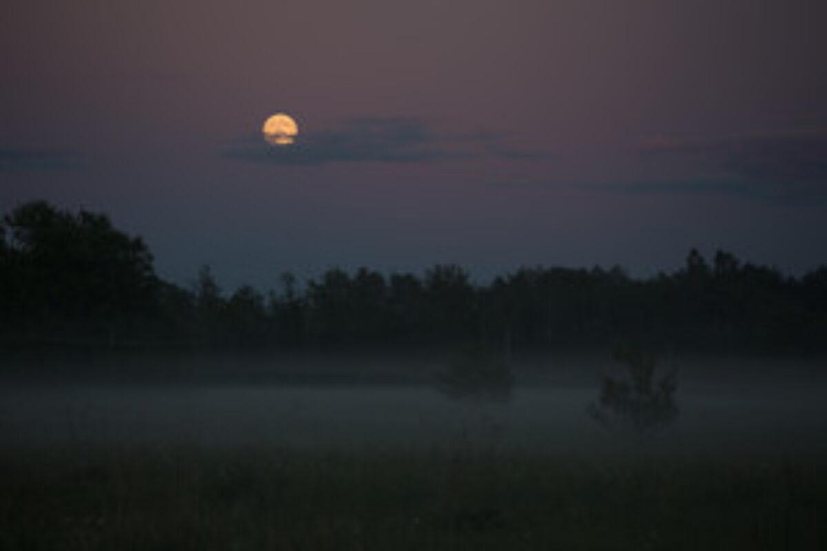 Foggy summer night