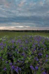 Flowery hillside