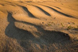 Lainetav liiv