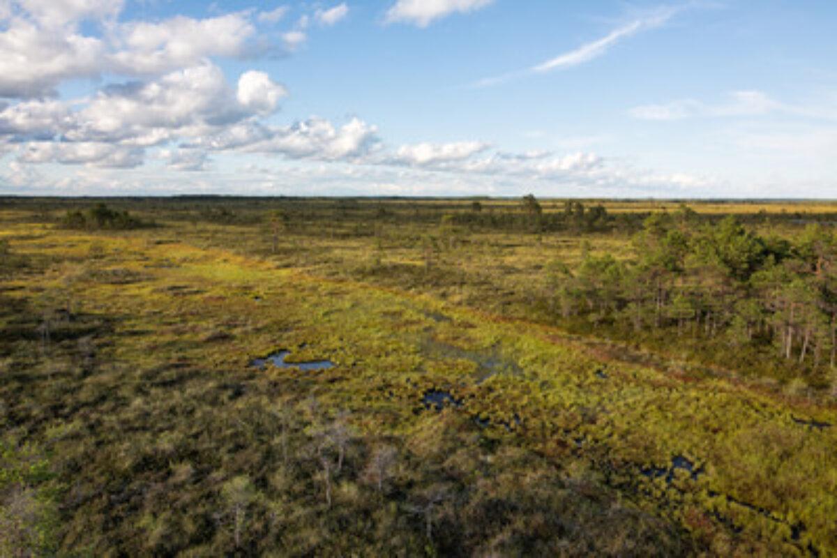 Summer bog landscape