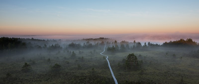 Bog path towards pink mist