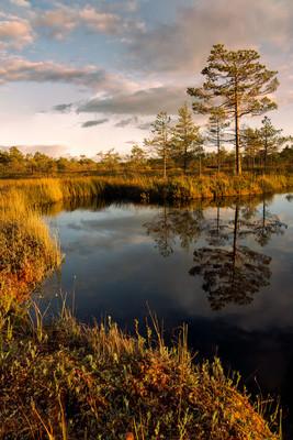 Autumn evening at a bog pond