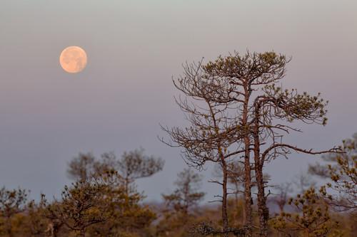 Setting moon before the sunrise