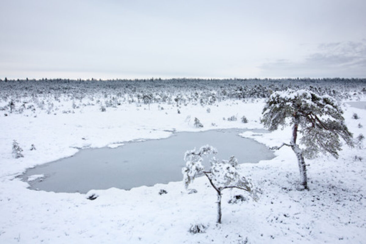 Snow covered bog
