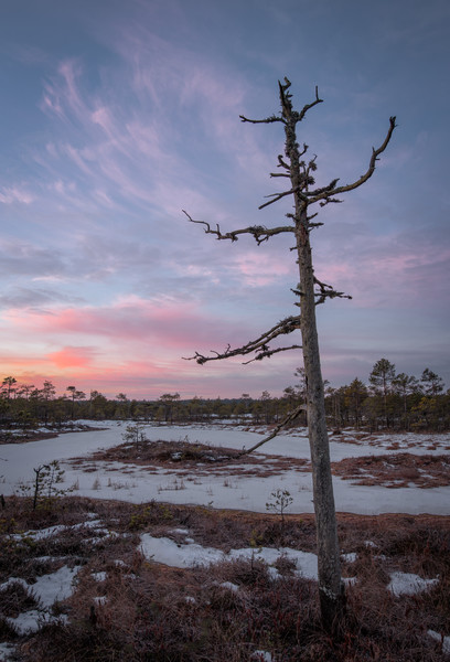 Dawn-colored sky above the bog