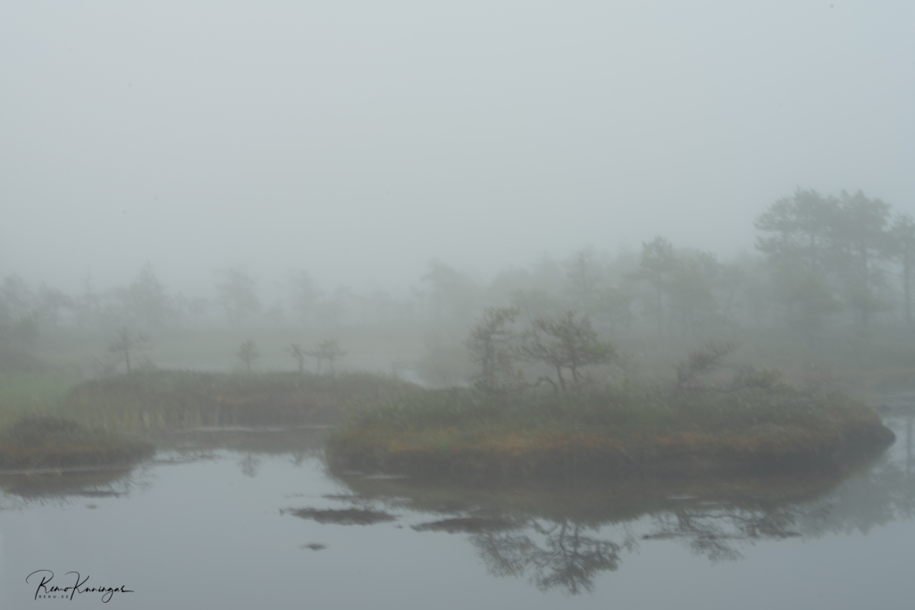 Misty bog islands