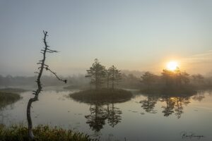 Morning bog silence