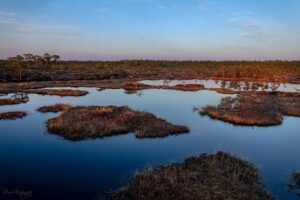 Sunset in the bog