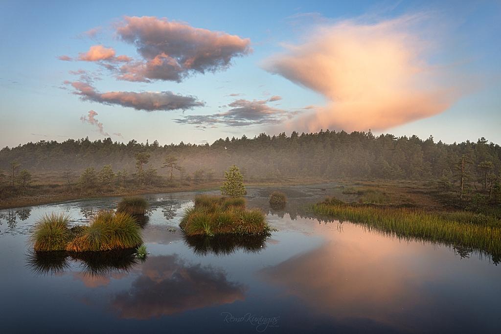 Misty morning in the bog