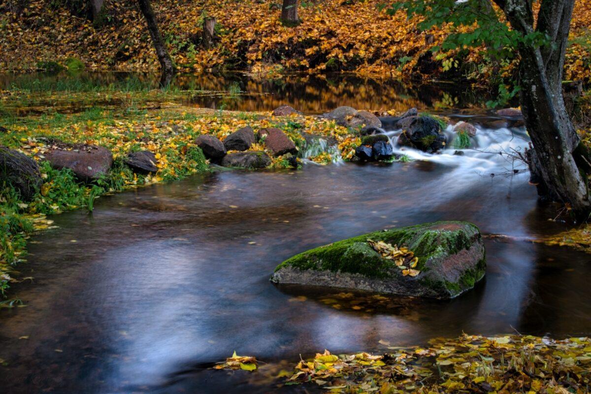 Golden banks of the stream