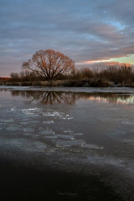 Tõusva päikese esimesed kiired valgustamas vana paju osaliselt külmunud Emajõe kaldal