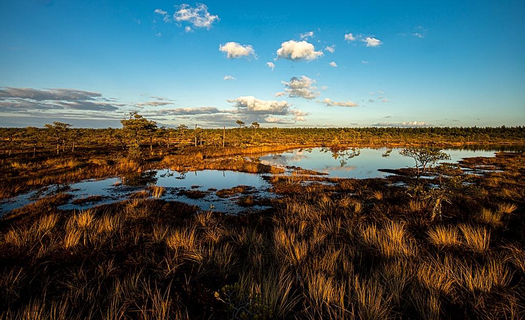 Sunny evening at Soomaa National Park