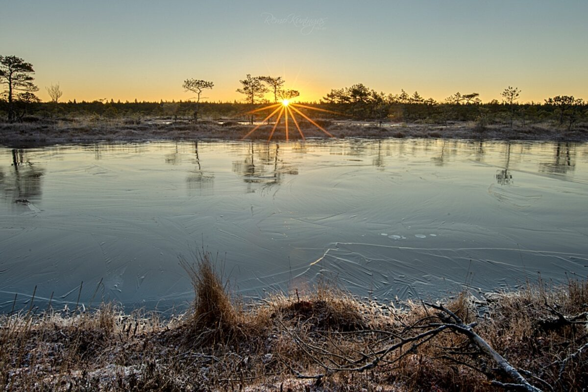 Frozen bog during sunrise
