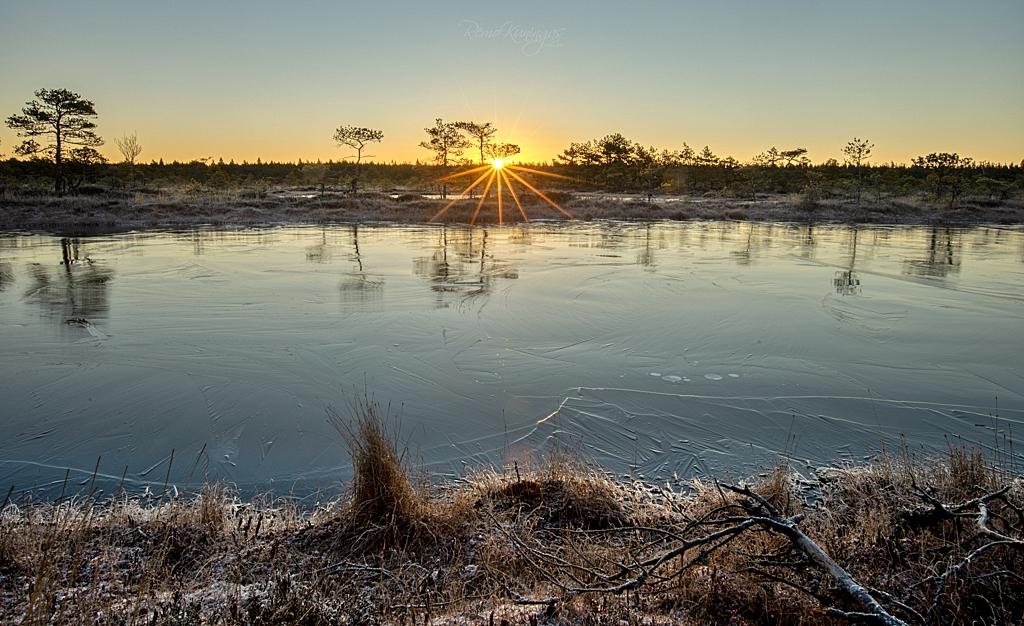 Frozen bog during sunrise