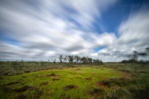 Windy bog landscape