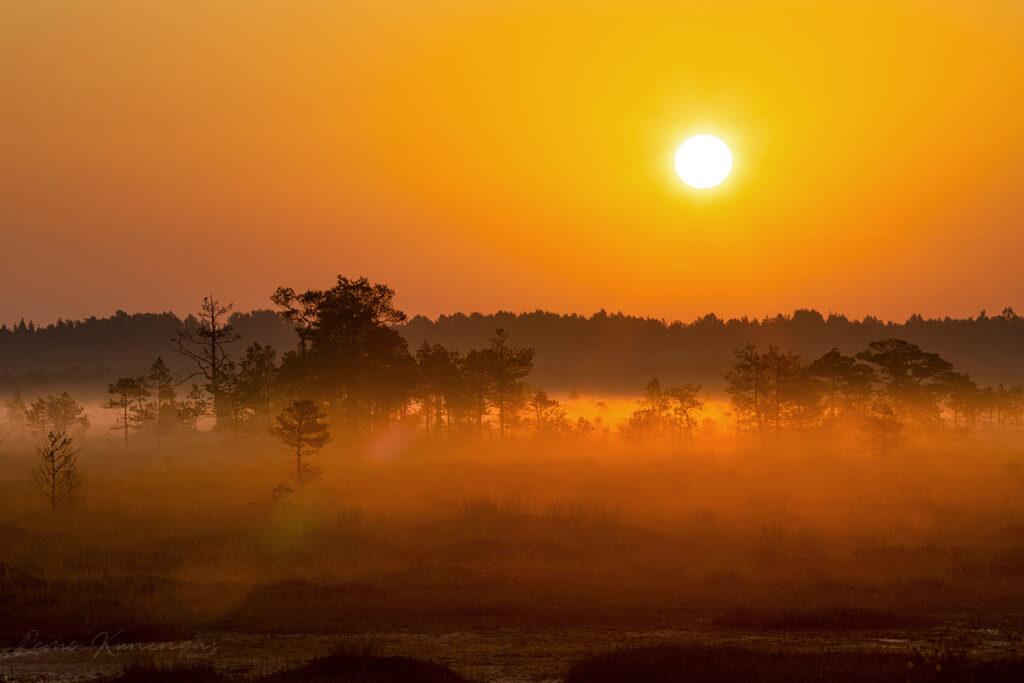 Sügishommikune udulooriga kaetud rabamaastik, mis on värvunud kuldkollaseks tõusva päikese poolt (Soomaa rahvuspark)