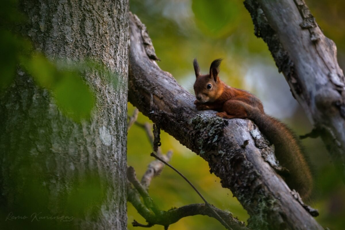 Squirrel on a branch