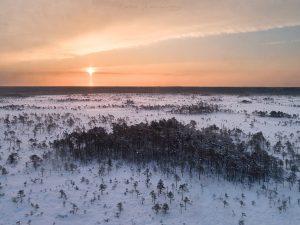 Snowy bog