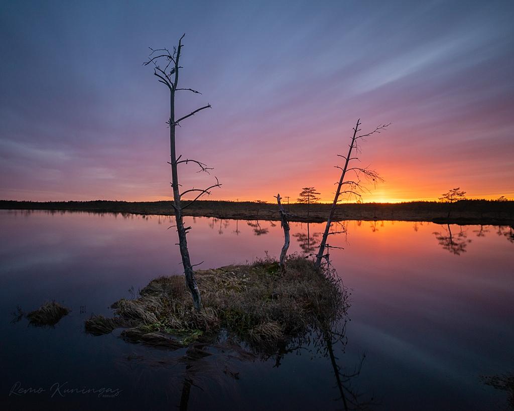 Üksik rabasaar kolme kuivanud puuga kaunis loojanguvalguses (Kikepera looduskaitseala)